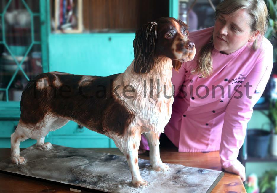 Life Size Springer Spaniel!