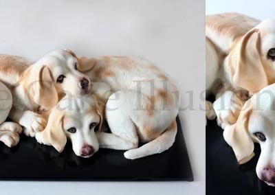 BeagleXLabLR