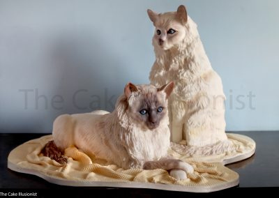 Lifesize Birman Cats
