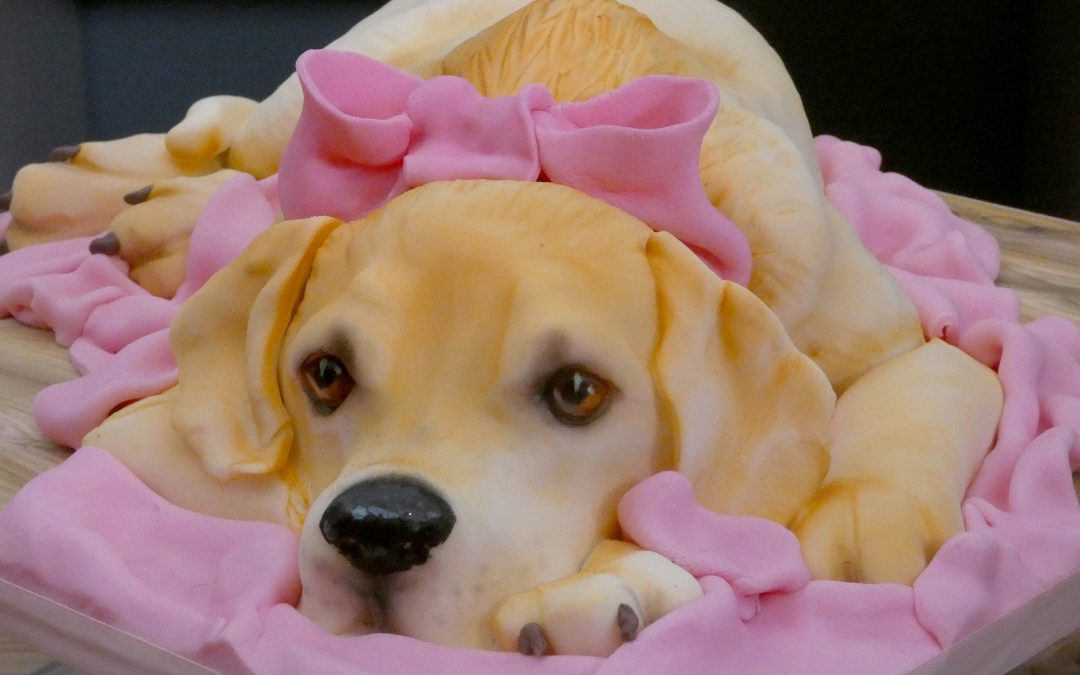 Have you ever seen a cuter Labrador?