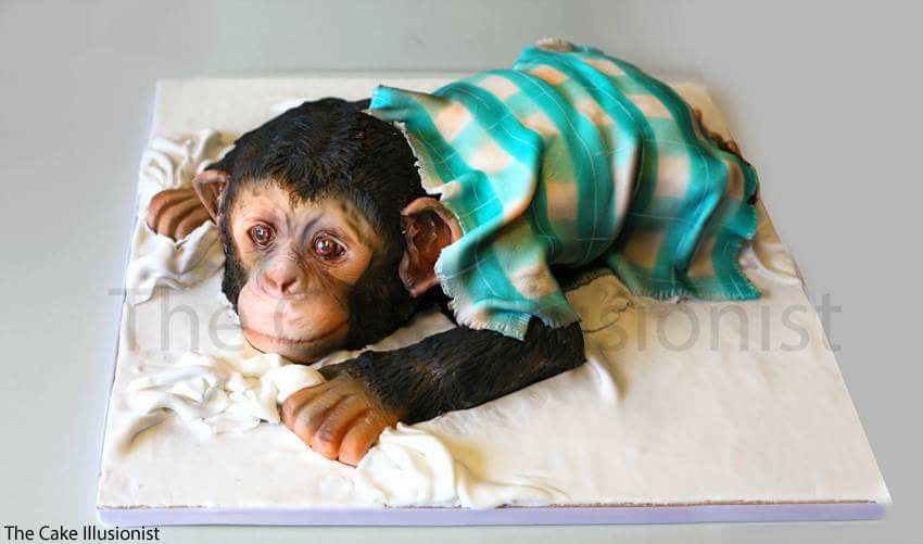 The Cuddly Chimpanzee