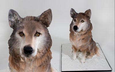 The Wild Wolf Tutorial
