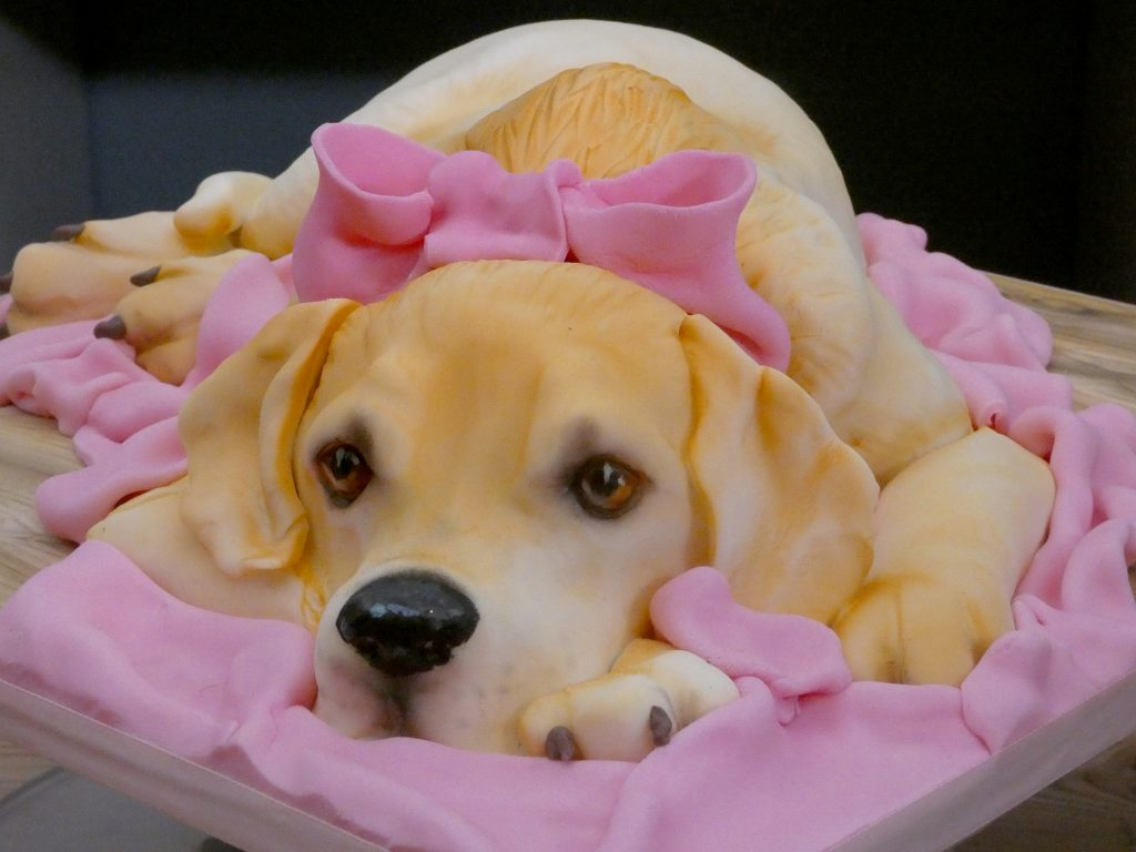 labdrador puppy, cute cake, sweet cake, adorable puppy, animal cake
